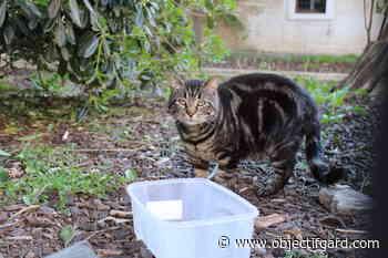 PONT-SAINT-ESPRIT La Ville lance sa campagne de stérilisation de chats errants - Objectif Gard