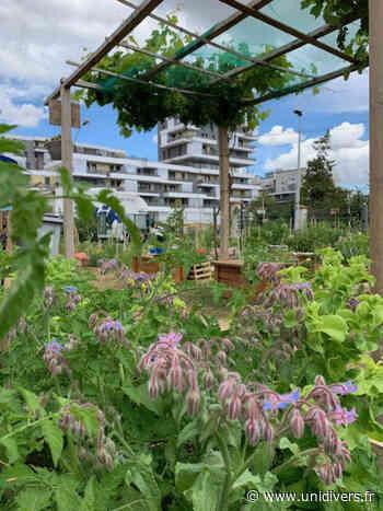 Visite libre du jardin potager Jardin partagé La Main Verte Gennevilliers - Unidivers