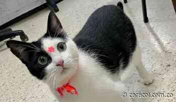 Timba, la gata de la alcaldía de Jamundí está sana y salva - Caracol Radio