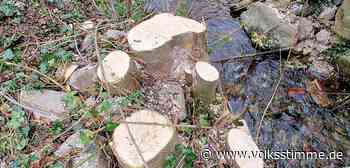 Naturschutz Ärger um radikalen Rückschnitt am Suenbach in Ilsenburg - Volksstimme