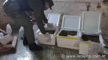 Gendarmería secuestró marihuana en un campo cercano a Venado Tuerto - La Capital (Rosario)