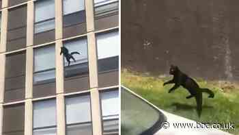 Cat jumps five storeys to safety from burning building