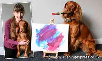 Talented Aberdeen dog learns to paint - and his artwork goes international - Aberdeen Evening Express