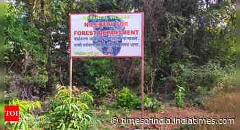 Mhadei sanctuary plundered of wealth, forest officials claim they are helpless - Times of India