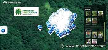 P&G establishes 'Forest for Good' in Sierra Madre Mountain Range – The Manila Times - The Manila Times