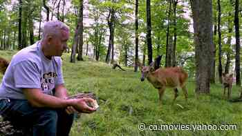Deer brings her fawns to visit man eating apples in the forest - Yahoo Movies Canada