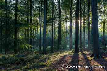 Woods vs. Forest: What's the Difference? - Treehugger