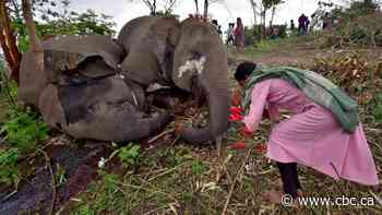 Lightning suspected in deaths of 18 elephants found in Indian forest reserve - CBC.ca