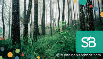 Seeing the Forest for the Trees: Dispelling Sustainable Forestry Misconceptions - Sustainable Brands
