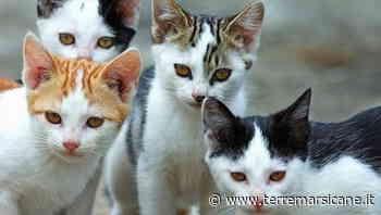 Istituzione di una colonia felina a Lecce nei Marsi - Terre Marsicane