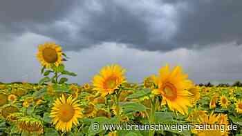 Es bleibt wechselhaft und kühl in Niedersachsen