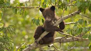 Check out these un-bear-ably cute pictures of a mama bear and her cubs