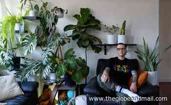 Transforming an apartment into a jungle oasis in the heart of Calgary - The Globe and Mail