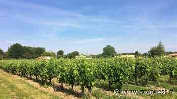 Cavignac : la commune est candidate au Prix de la préservation du patrimoine viticole - Sud Ouest