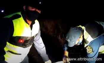 VIDEO Se recuperaron y liberaron seis quirquinchos y cuatro armadillos en Anta - El Tribuno.com.ar