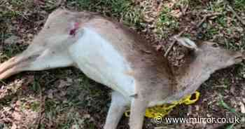 Poor animals caught in cruel snares try to 'chew off their own limbs to escape'