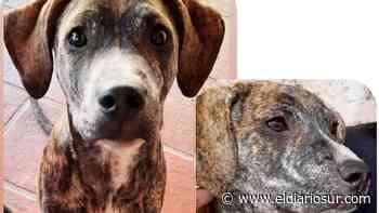 """Encontraron a """"Osvaldo"""": el perro perdido en Monte Grande - El Diario Sur"""