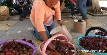 Trae la pitaya abundancia para Jalpa - Imagen de Zacatecas, el periódico de los zacatecanos
