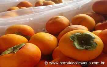 Mesa Brasil Sesc dos Vales do Taquari e Rio Pardo recebe doações de caquis de Pinto bandeira - Portal de Camaquã