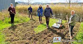 Umweltprojekt Insektenoase Kreis Vulkaneifel Darscheid Gerolstein - Trierischer Volksfreund