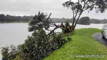 Chainsaw vandals 'butcher' New Plymouth Lake Rotomanu tree - Stuff.co.nz