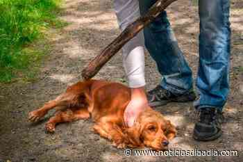 Lucha de frente contra el maltrato animal en Chía y Subachoque, Cundinamarca - Noticias Día a Día