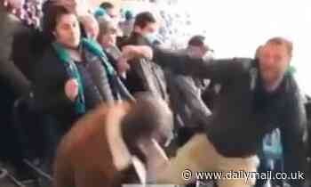 Two men throw punches and fall down seats at Port Adelaide and Western Bulldogs game