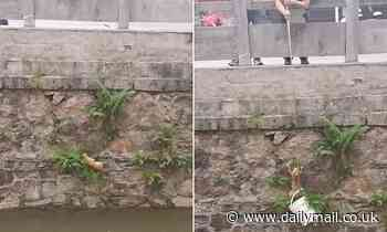 Heartwarming moment passers-by lower down a bucket to save stranded kitten from drowning in a river