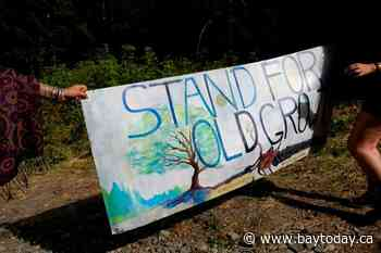 RCMP move to end blockade against logging of forest on Vancouver Island