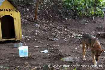 Canil de Esteio instala passeadores e casinhas para seus cães - Diário de Canoas
