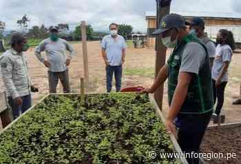 San Martín: Entregan plantones para reforestar el eje carretero Tarapoto – Yurimaguas - INFOREGION