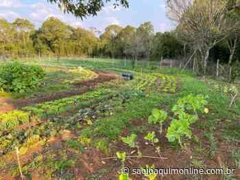 Iniciativa de horta escolar trabalha empreendedorismo rural em Fraiburgo - Agência de Notícias São Joaquim Online
