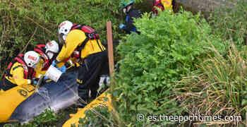 Rescatan a una ballena varada en el río Támesis en Londres - lagranepoca