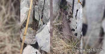 San Donato/Alvito-Rinvenuta bomba di mortaio inesplosa grazie ad un gruppo di escursionisti - TG24.info