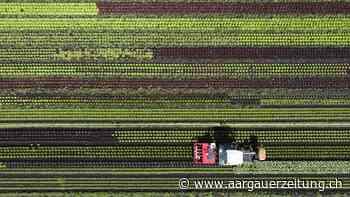 Landwirtschaft - Vier von acht Bauernhöfen in Waldenburg sind Bio – mehr als in den meisten Gemeinden - Aargauer Zeitung