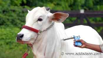Monte Alegre faz alerta sobre prazo de vacinação em gado - ACidade ON