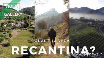 """La spinosa storia delle """"Recantine"""" tra Maser, Castelcucco e Asolo: il ritorno di un vino perduto di cui ancora si discute l'origine - Qdpnews"""