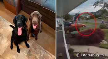 YouTube viral: pequeño remolino de viento levanta a perrito del piso por unos segundos - LaRepública.pe