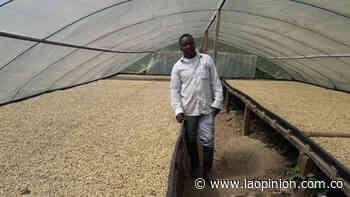 Café cultivado en Ragonvalia es comprado en Shanghái | La Opinión - La Opinión Cúcuta