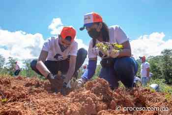 Edesur siembra 4800 plantas en los Mogotes de Villa Altagracia - Proceso.com.do