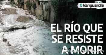 """Video: Río de Oro, fuente de agua y vida que """"se resiste a morir"""" - Vanguardia"""