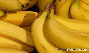 Llaman a huelga en cinco fincas bananeras en Bocas del Toro - En Mayúscula