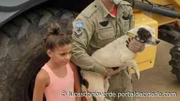 Bombeiros resgatam cachorro preso em contêiner em Lucas do Rio Verde - ® Portal da Cidade | Lucas do Rio Verde