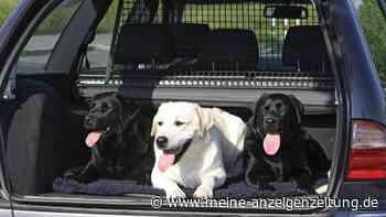 Hund im Auto: So transportieren Sie den Vierbeiner sicher