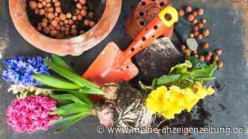 Blähton richtig nutzen: So hilft der Zusatz Ihren Pflanzen