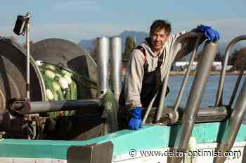 Spot prawn season allows Chung family to continue Ladner tradition - Delta-Optimist
