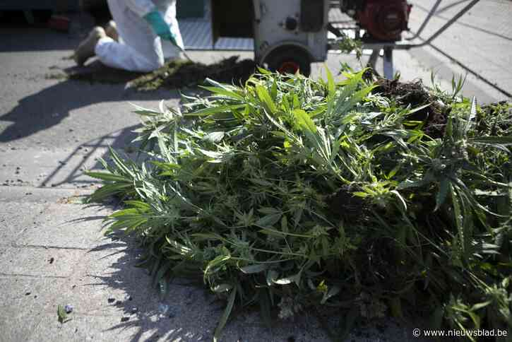 Viertal bestraft voor cannabisteelt
