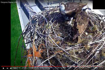 Osprey cam is back live in Osoyoos – Salmon Arm Observer - Salmon Arm Observer