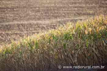 Estiagem em Ipira tem prejuízo de aproximadamente R$ 8 milhões - Rádio Rural