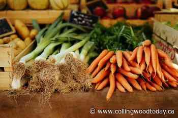 Thornbury and Flesherton farmers' markets on hold - CollingwoodToday.ca